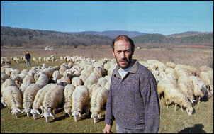 Un pastore di origine sarda, con il suo gregge sulle colline senesei. Foto da «Famiglia Cristiana», 7, 1998.
