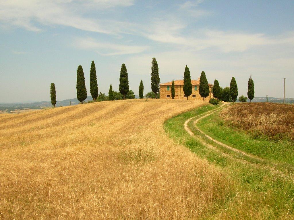 Podere in val d'Arbia, Siena