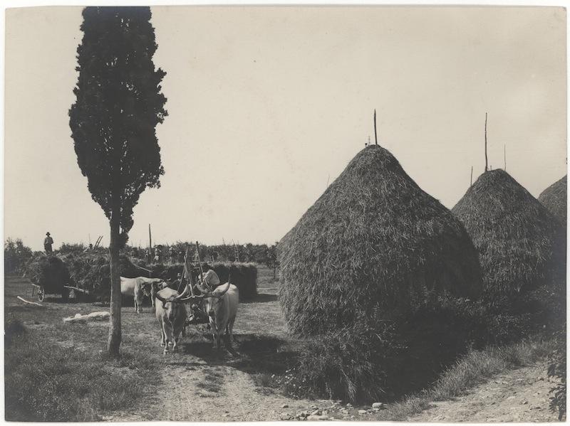 Scena di lavoro nei campi